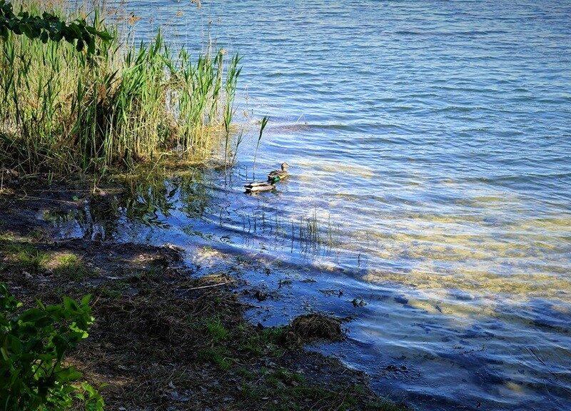 Jezioro Chechło