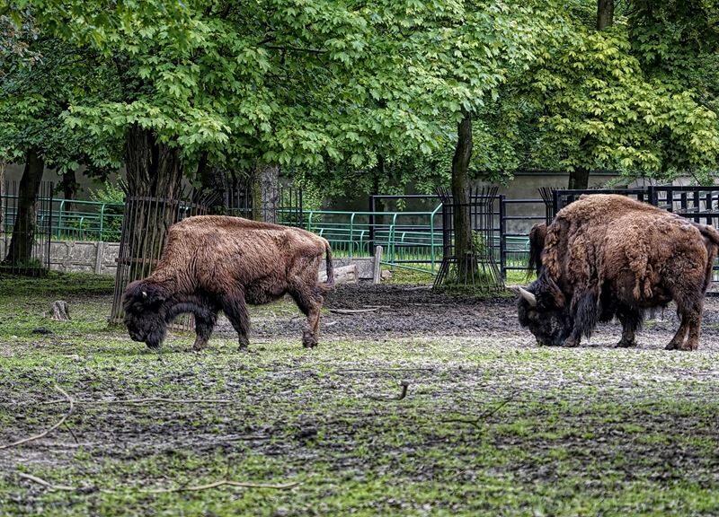 Śląski Ogród Zoologiczny