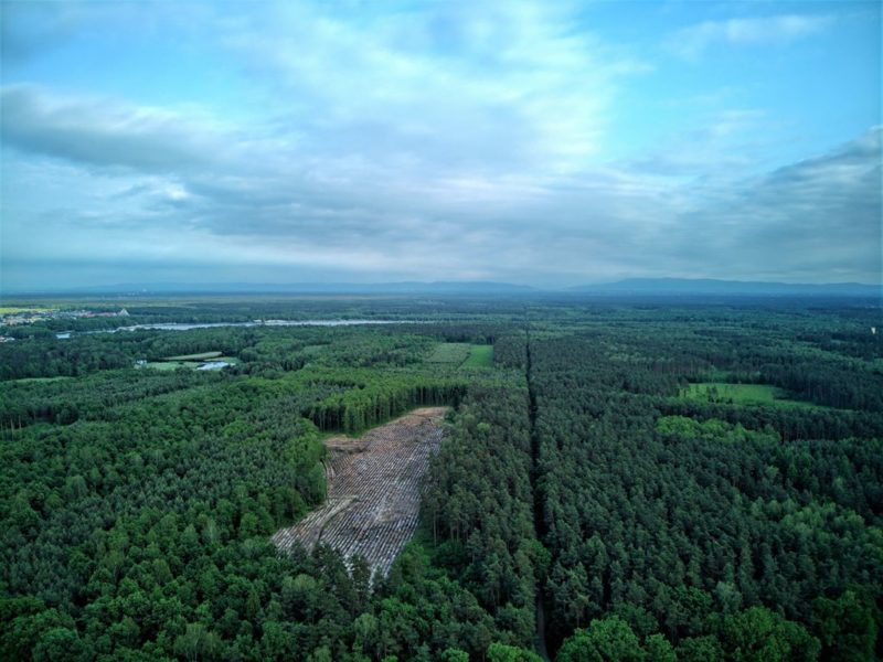 Tychy - las w stronę Kobióra
